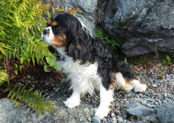 Élevage De La Vallée D' Alina