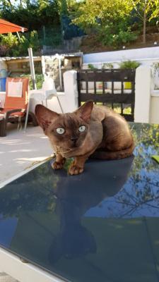 Élevage Des Cats De Choc