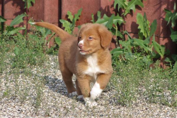 Afficher le site de l'élevage Duckinson