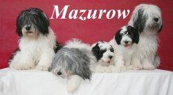 Élevage Z  Mazurow