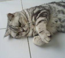 Élevage Wondercat