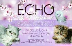 Echo De Narcisse