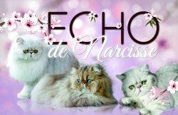 Élevage Echo De Narcisse