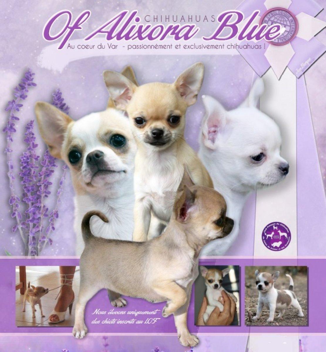 Of Alixora Blue