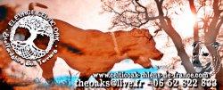 Élevage Celtic Oak