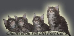 Le Val Del Fort Cat's
