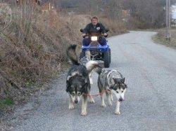 Élevage Des Loups Du Valgo