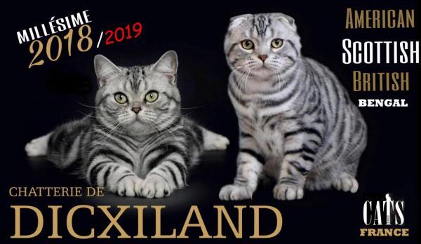 Afficher le site de l'élevage De Dicxiland