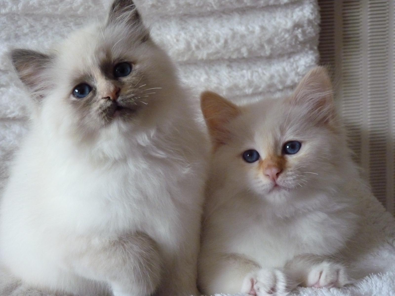 De Pretty Cat