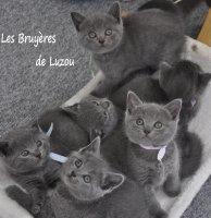 Élevage Des Bruyères De Luzou