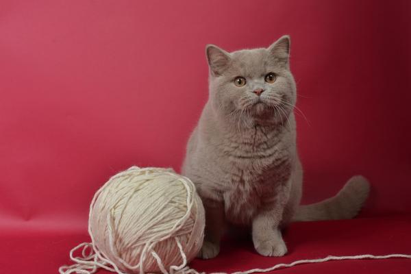 Élevage De Cat's Hart