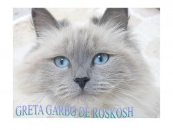 Élevage De Roskosh