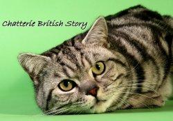 Élevage Of British Story