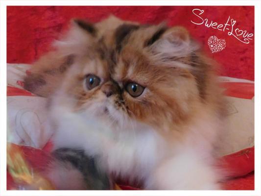 Élevage Sweet-love
