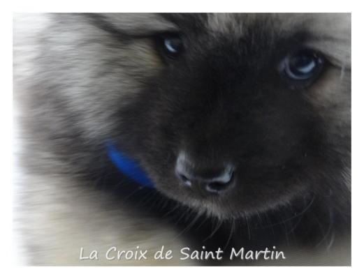 Élevage La Croix De Saint Martin