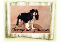 Élevage Les Epinouses