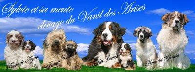 Afficher le site de l'élevage Du Vanil Des Artses