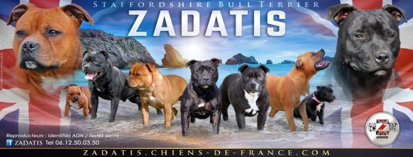 Élevage Zadatis N ° 59397