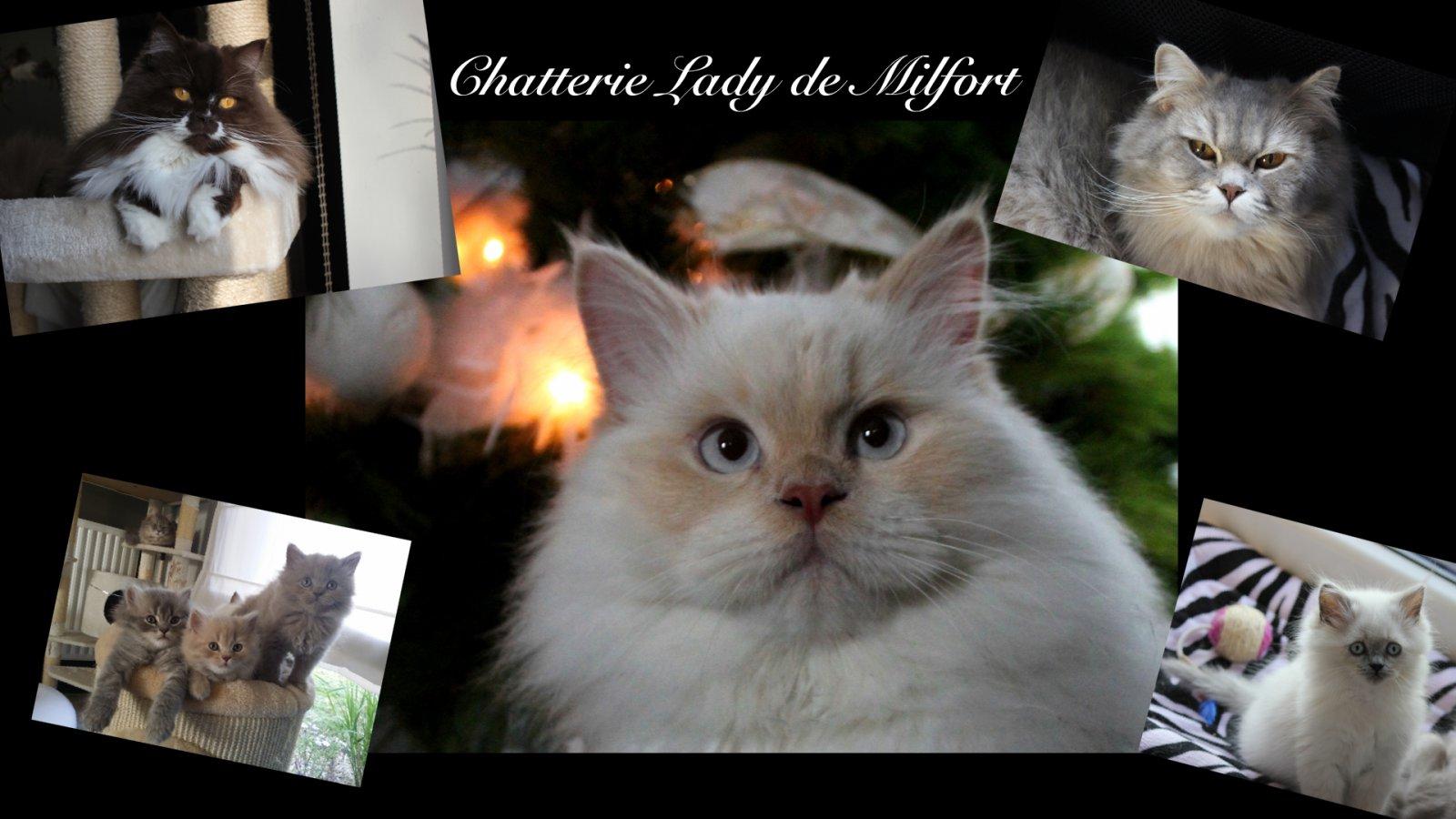 Chatterie Lady De Milfort
