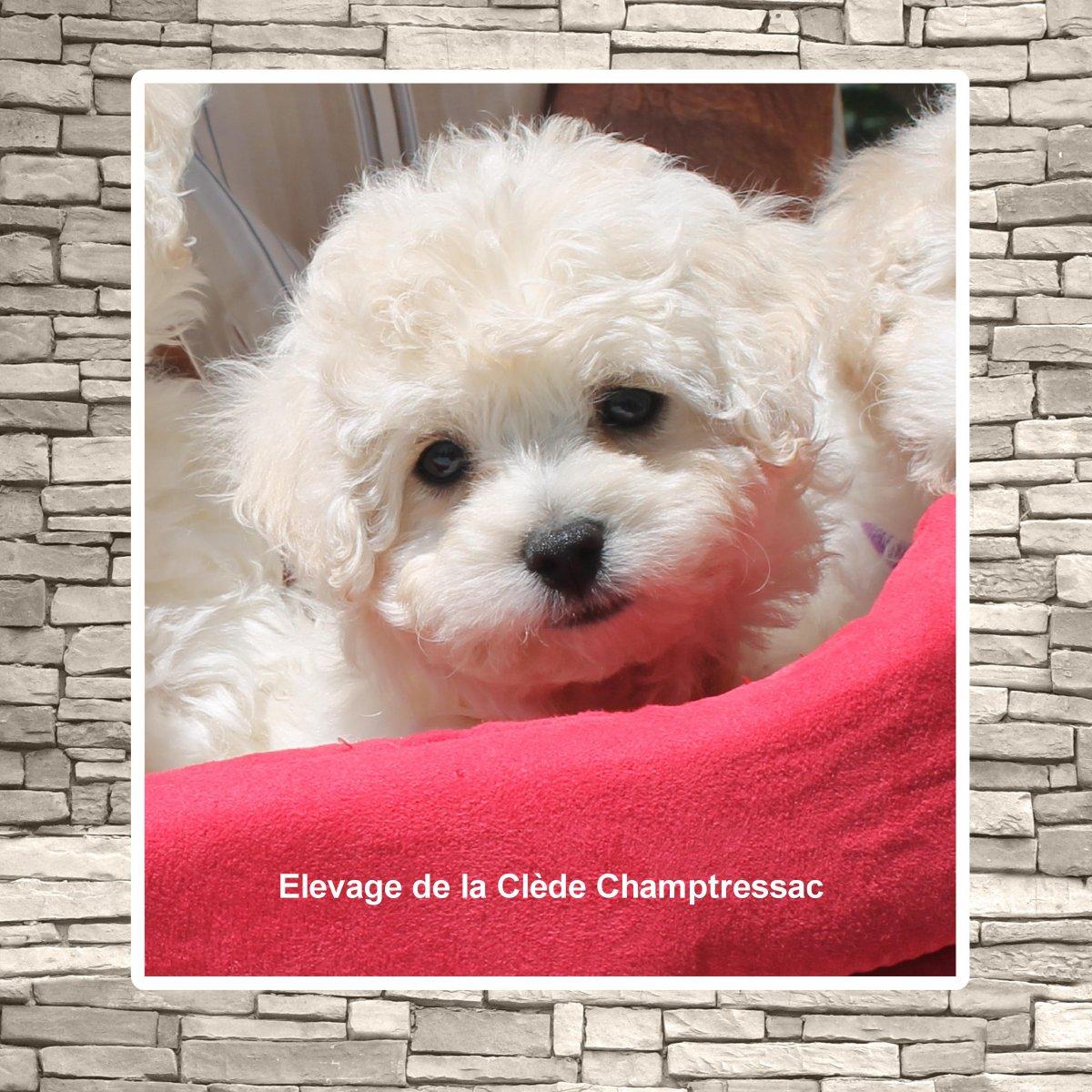 De La Clède Champtressac