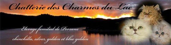 Élevage Chatterie Des Charmes Du Lac