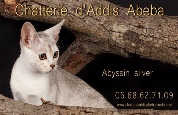Abyssin D'addis Abeba