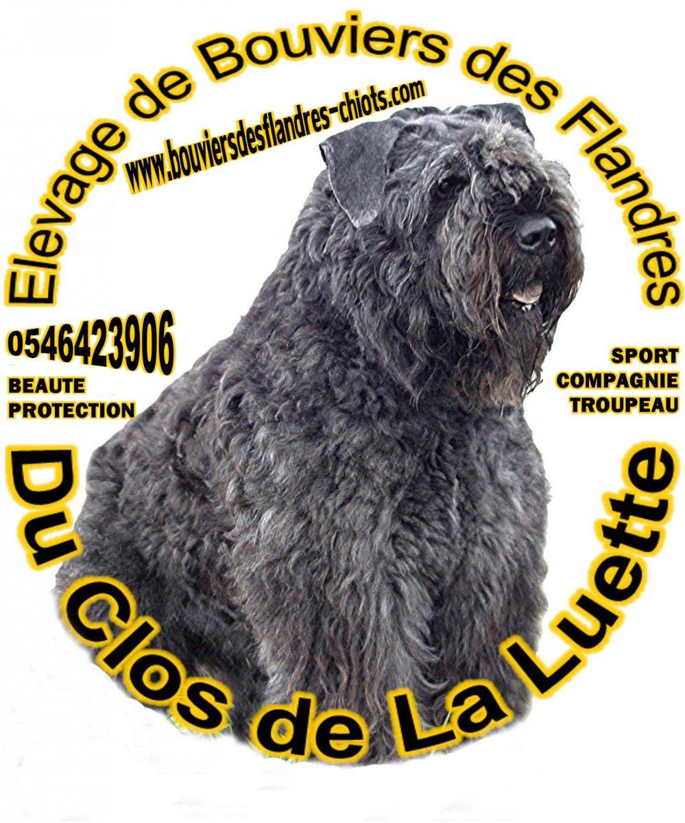 Clos De La Luette