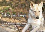 Élevage Folco Des Loups
