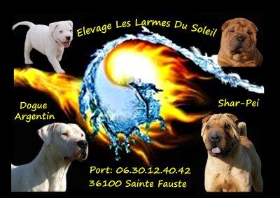 Afficher le site de l'élevage Des Larmes Du Soleil