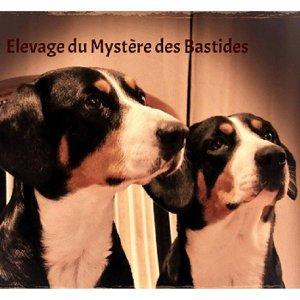 Afficher le site de l'élevage Du Mystère Des Bastides