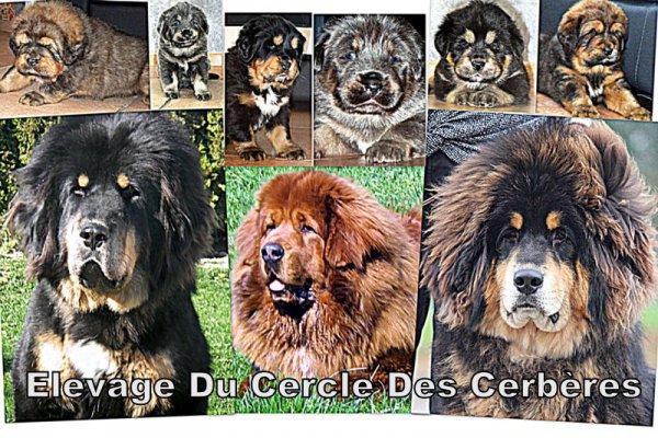 Afficher le site de l'élevage Du Cercle Des Cerbères