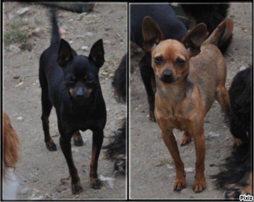 Afficher le site de l'élevage Des Perles D'haiti