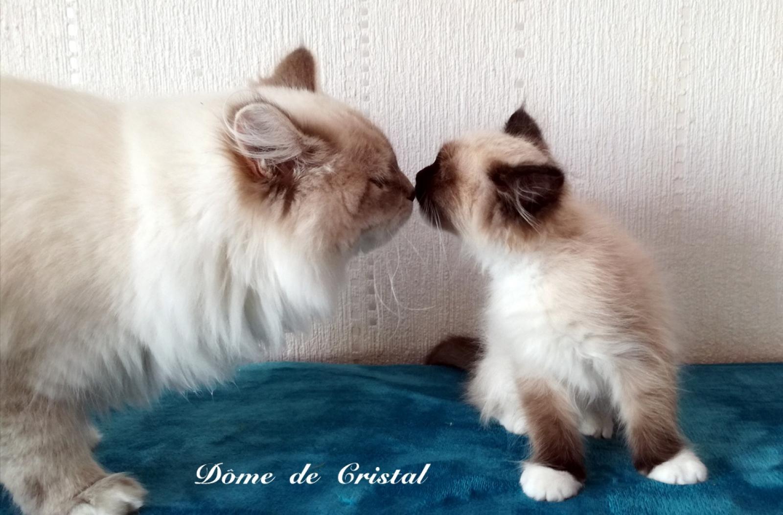 Du Dôme De Cristal