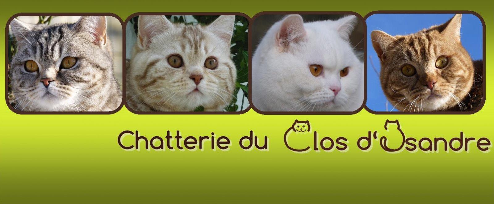 Chatterie Du Clos D'isandre