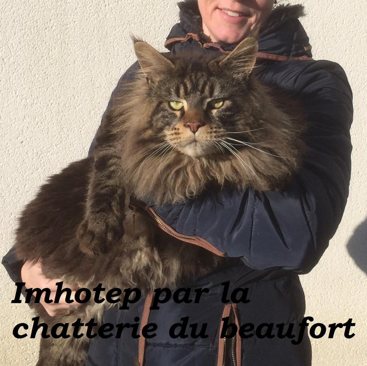 Du Beaufort
