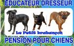 Élevage Des Perles D'haiti
