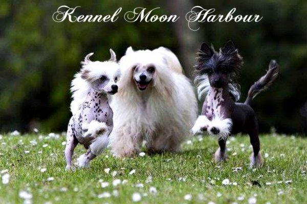 Afficher le site de l'élevage Moon Harbour