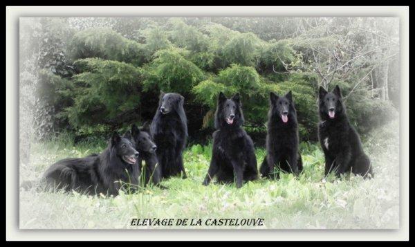 Afficher le site de l'élevage De La Castelouve