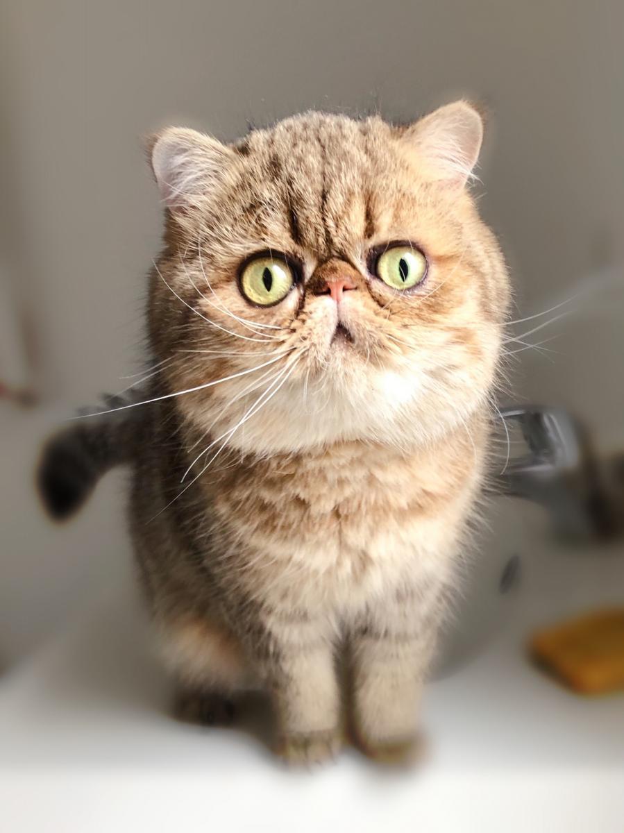 Nice Cats