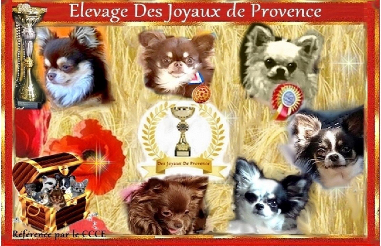 Des Joyaux De Provence