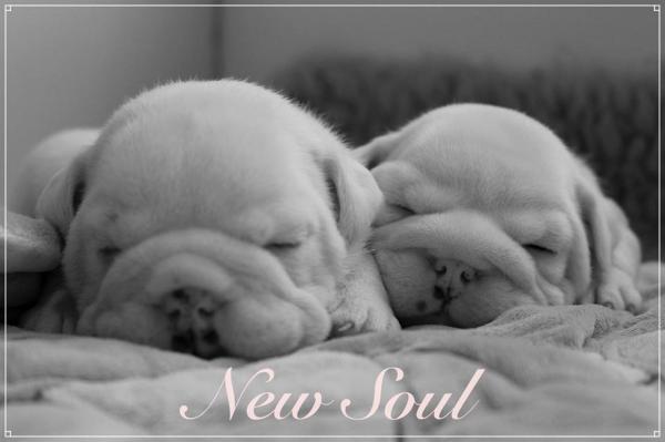 Afficher le site de l'élevage New Soul