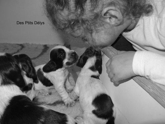 Afficher le site de l'élevage Des Ptits Deslys