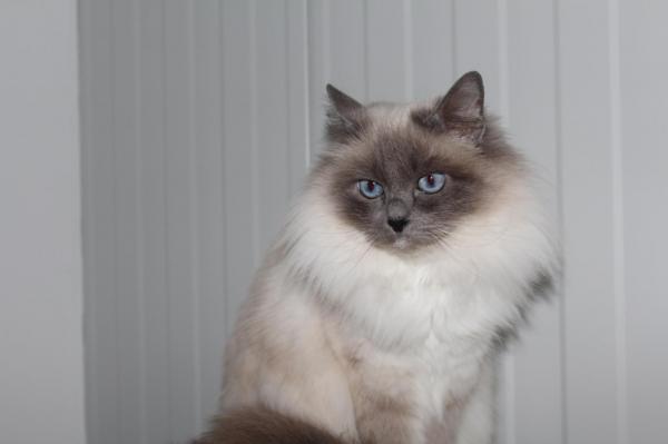 Afficher le site de l'élevage Des Joyaux De La Sambre Des Tresors De Caty