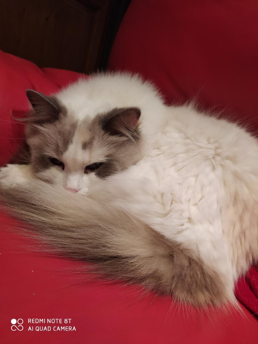 Cats-et-mimis