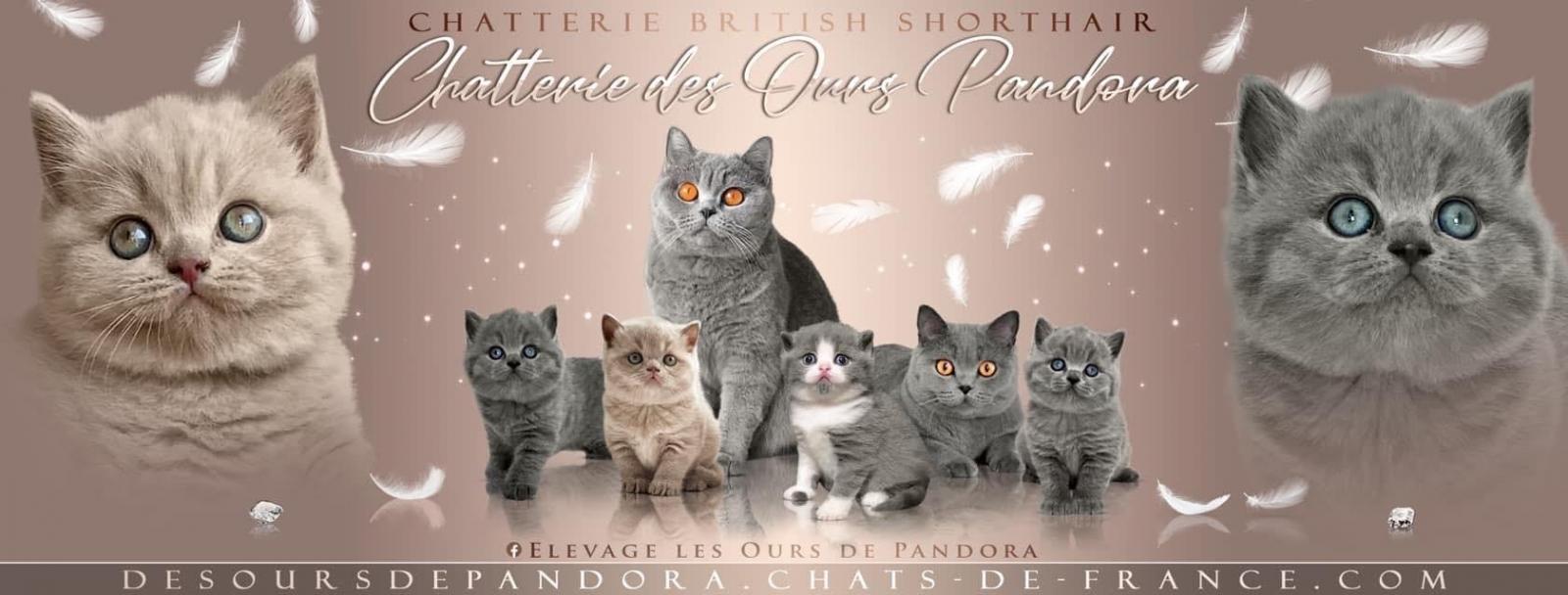 Des Ours Pandora