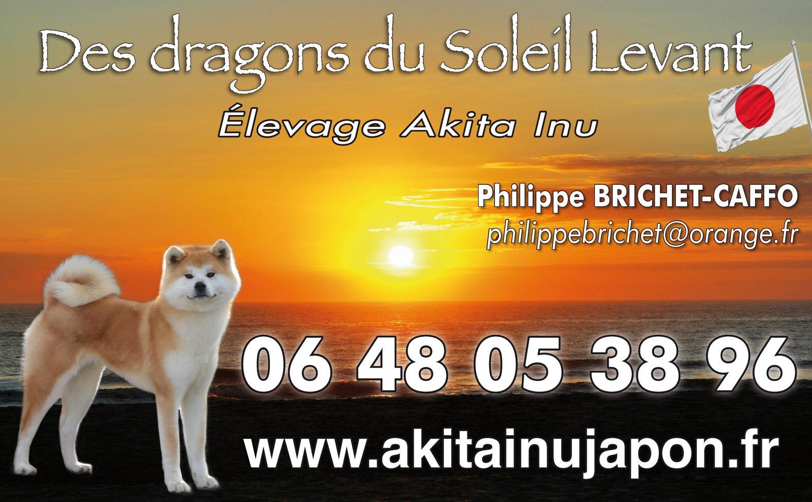 Elevage Des Dragons Du Soleil Levant