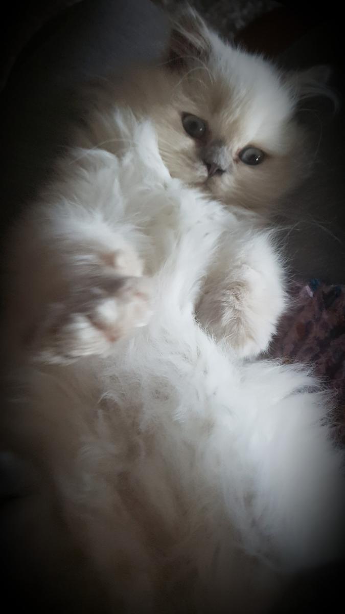 Des Katy's Kitties