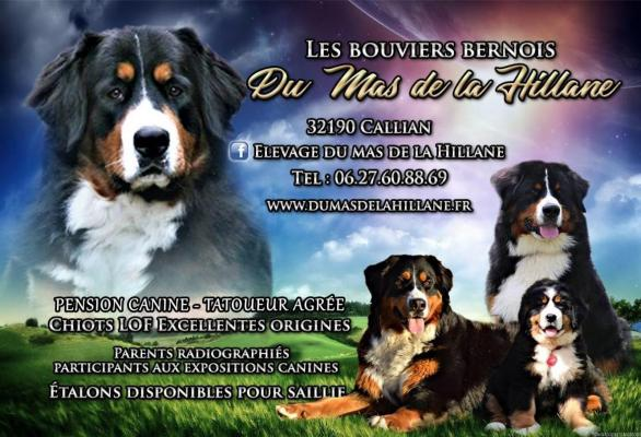 Afficher le site de l'élevage Du Mas De La Hillane De La Hillane