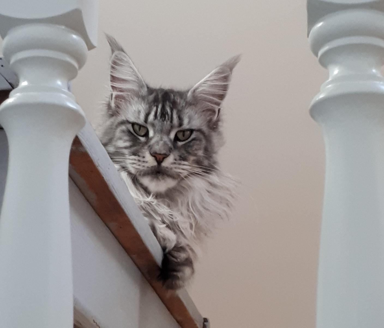 Chaman'jazz'cat