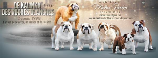 Afficher le site de l'élevage De Kalinka Des Roches Blanches
